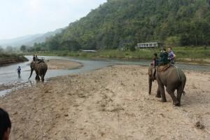 on the elephants